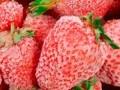 Оборудование для фруктохранилищ